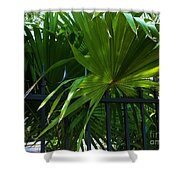Its Pretty And Tropical In Key West  Shower Curtain