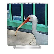Ivis Ibis And Packy Shower Curtain