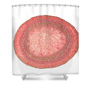 Ivy Stem Shower Curtain