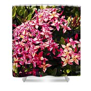 Ixora Shower Curtain