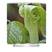 Jack Fly Shower Curtain