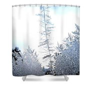 Jack Frost's Ice Forest Shower Curtain