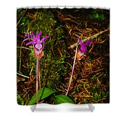 Jack In The Pulpit Shower Curtain