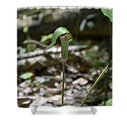 Jack-in-the-pulpit Shower Curtain