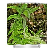 Jack-in The-pulpit_4588 Shower Curtain