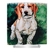 Jack Russell Woogle Shower Curtain