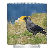 Jackdaw Gathering Nesting Materials Shower Curtain