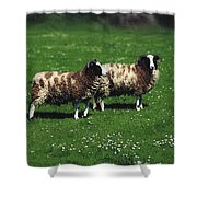 Jacob Sheep Shower Curtain