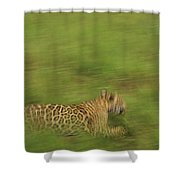 Jaguar Panthera Onca Running Shower Curtain