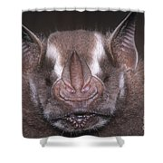 Jamaican Fruit Bat Shower Curtain
