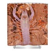 January River Blind Crayfish Shower Curtain