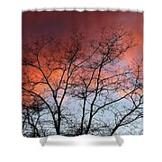 January Sunset Silhouette Shower Curtain