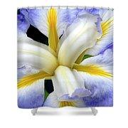 Japanese Iris Shower Curtain