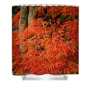 Japanese Maple In Autumn Shower Curtain