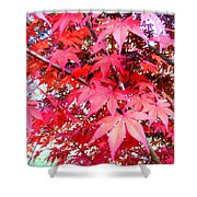 Japanese Maple Leaves 11 In The Fall Shower Curtain