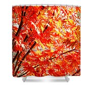 Japanese Maple Leaves 12 In The Fall Shower Curtain