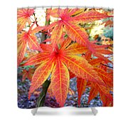 Japanese Maple Leaves 13 In The Fall Shower Curtain