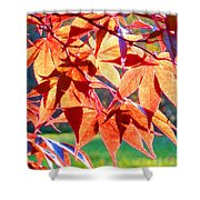 Japanese Maple Leaves 6 In The Fall Shower Curtain