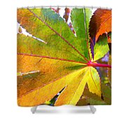 Japanese Maple Leaves 7 In The Fall Shower Curtain