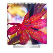 Japanese Maple Leaves In The Fall Shower Curtain