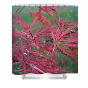 Japanese Red Leaf Maple Hybrid Shower Curtain