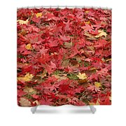 Japanese Red Maple Leaves Shower Curtain