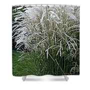 Japanese Silver Grass Full Height Shower Curtain
