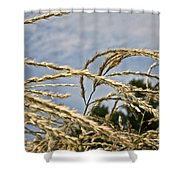 Japanese Silver Grass Shower Curtain