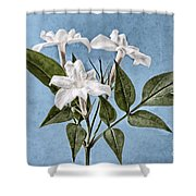 Jasminum Officinale Shower Curtain by John Edwards