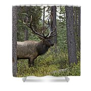 Jasper National Park, Jasper, Alberta Shower Curtain