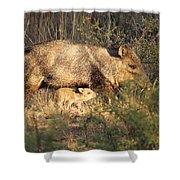 Javalina And Baby Shower Curtain