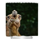 Jaw Dropping Shower Curtain