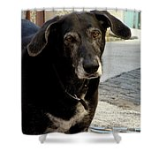 Jean-luc's Dog Shower Curtain