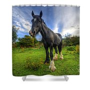 Jeany Shower Curtain