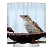 Jelly Lover Shower Curtain