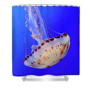 Jellyfish 4 Shower Curtain