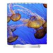 Jellyfish 6 Shower Curtain