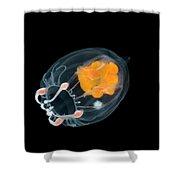 Jellyfish Leuckartiara Sp, Weddell Sea Shower Curtain