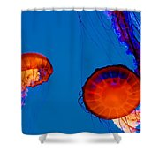 California Monterey Aquarium Jellyfish Exhibit  Shower Curtain