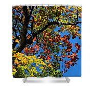 Jewels Of Autumn Shower Curtain