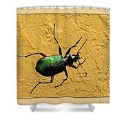 Jeweltone Beetle Shower Curtain