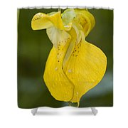 Jewelweed Flower 1 Shower Curtain