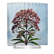 Joe-pye Weed Wildflower - Eupatorium Shower Curtain