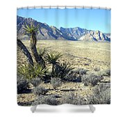 Joshua Tree And Mount Wilson Shower Curtain
