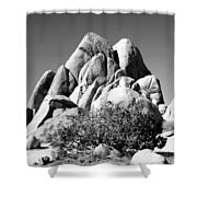 Joshua Tree Center Bw Shower Curtain