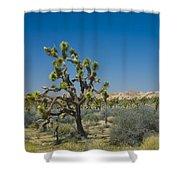 Joshua Trees Number 339 Shower Curtain