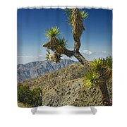 Joshua Trees Number 357 Shower Curtain