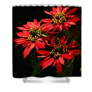 Joy And Prosperity IIi Shower Curtain