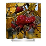 Juicy Rose Hips Shower Curtain