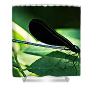 July Dragonfly II Shower Curtain